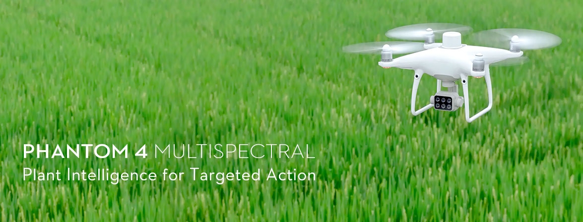 Plant Intelligence for Targeted Action